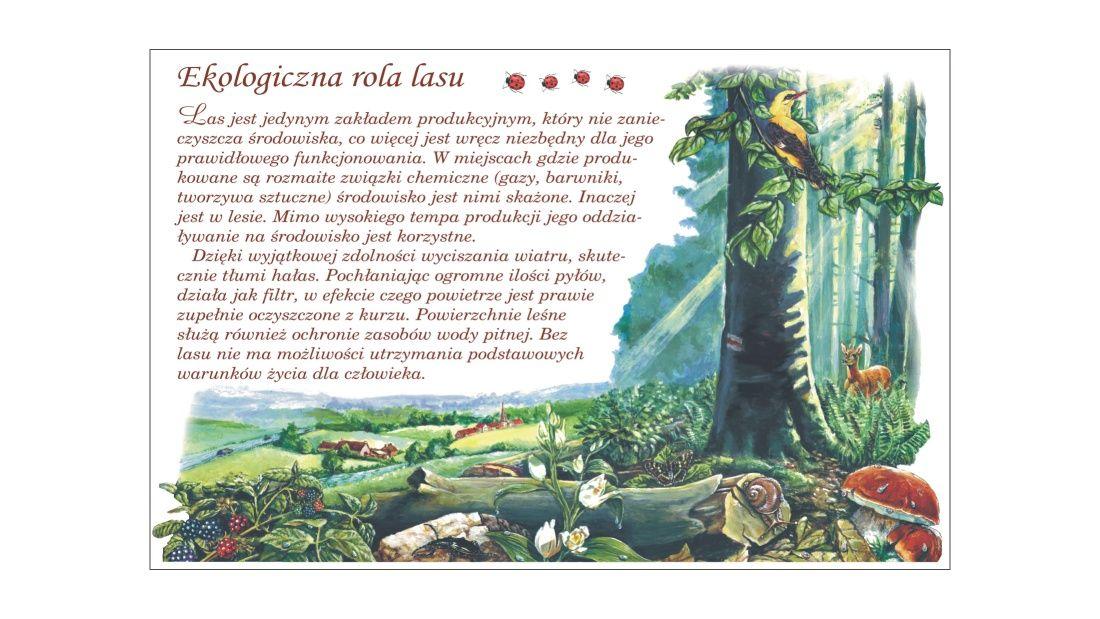 Plansze edukacyjne (TE-3) - Ekologiczna rola lasu