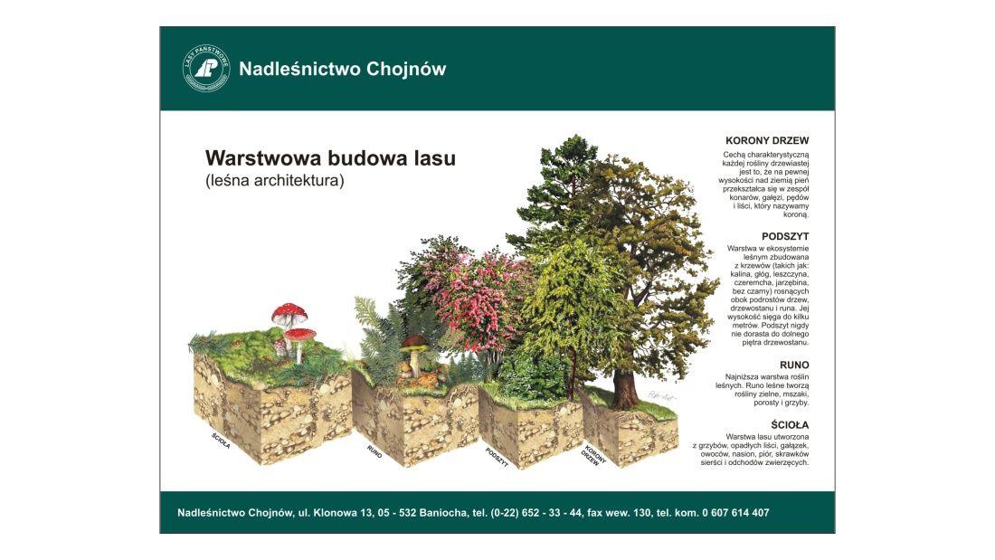 Tablice edukacyjne (TE-9a) - Warstwowa budowa lasu