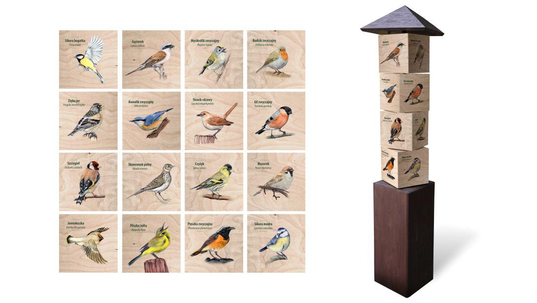 KWm-8 - Gra edukacyjna kostki wiedzy - Ptaki spiewajace