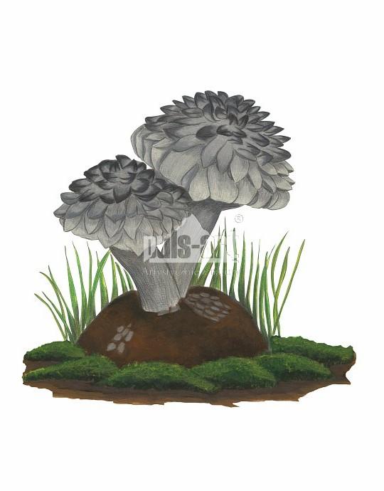 Szyszkowiec łuskowaty (Strobilomyces strobilaceus)