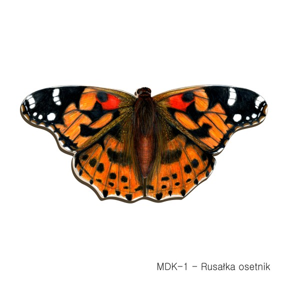 MDK-1 - Rusalka osetnik (magnesy drewniane ksztalty)