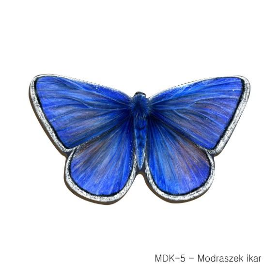 MDK-5 - Modraszek ikar (magnesy drewniane ksztalty)
