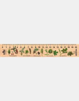LESs-7 - drzewa (linijka drewniana)