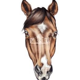 Maska - koń