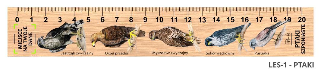 LES-1 - ptaki drapiezne (linijka drewniana)