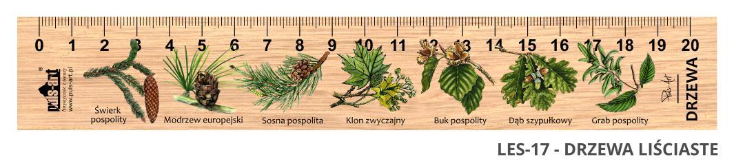 LES-17 - Drzewa lisciaste i iglaste (linijki drewniane)