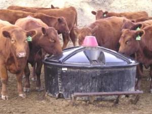 liquid animal feed mixing