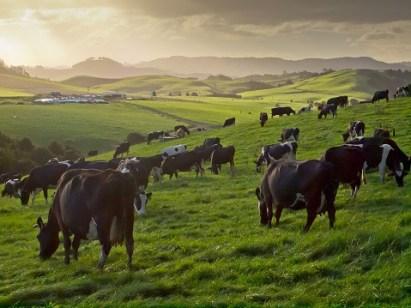 dairy farm solar system