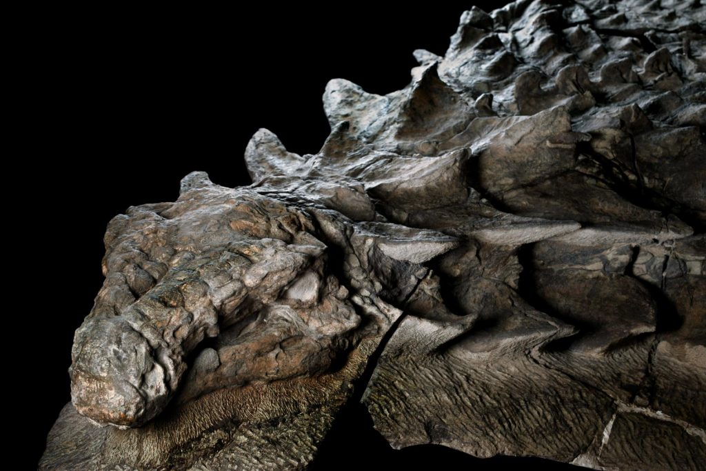 The World S Best Preserved Dinosaur Is Now On Display In
