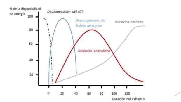 ATP Nutrición
