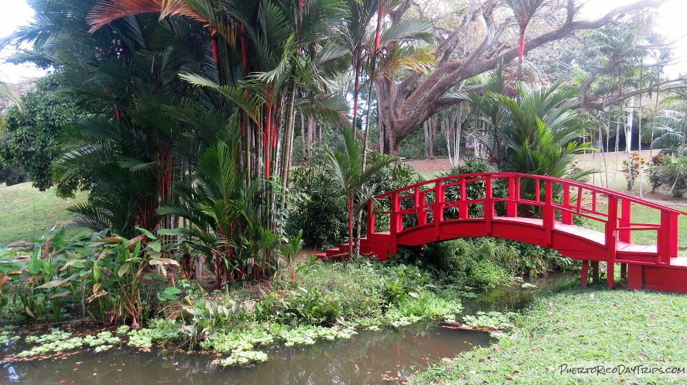 Comienza el evento navideño del Jardín Botánico de la UPR