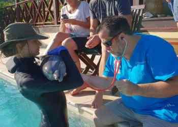 Especialistas marinos de la Interamericana rescatan cachorra delfín en Antigua