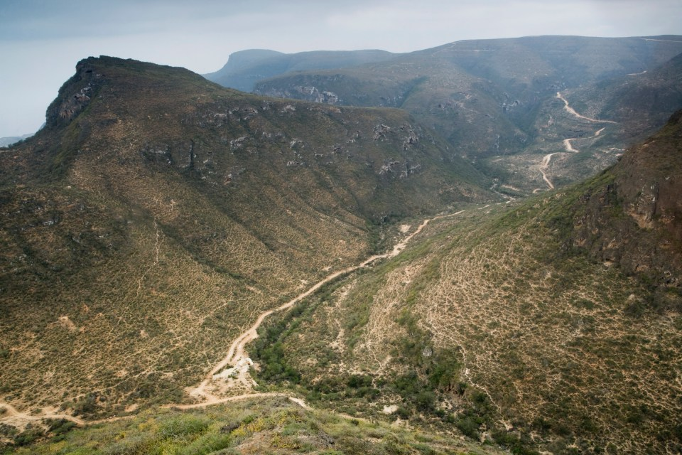 Road and livestock trails dissecting cloud forest, Hawf Protected Area, Yemen