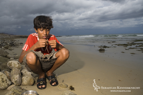 Boy hooking worm for fishing from shore, Hawf Protected Area, Yemen