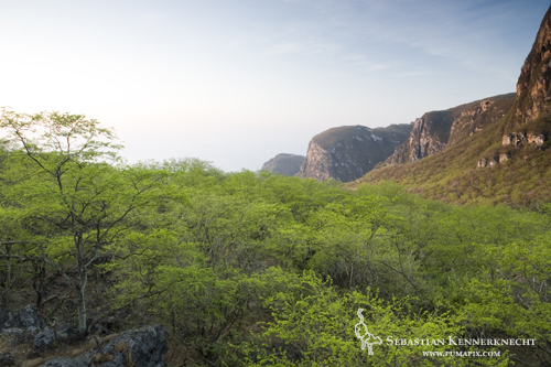 Cloud forest and escarpment, Hawf Protected Area, Yemen
