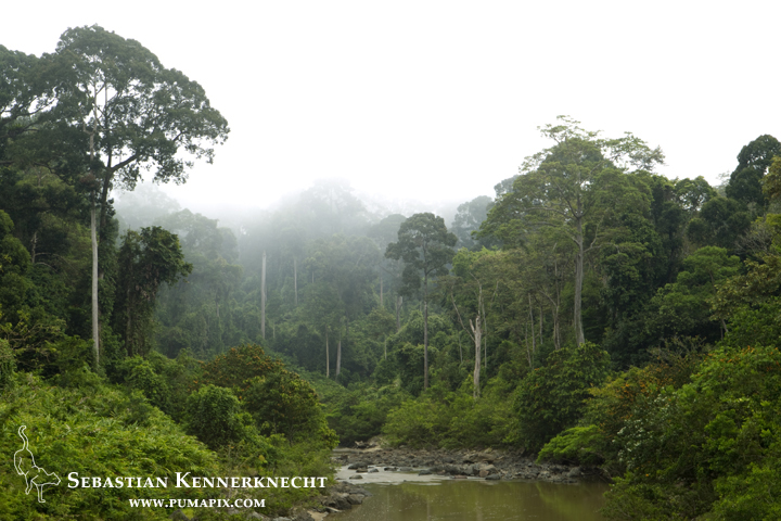 Rainforest in mist, Danum Valley Conservation Area, Sabah, Borneo, Malaysia