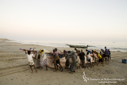Volunteers helping to pull boat ashore, Hawf Protected Area, Yemen