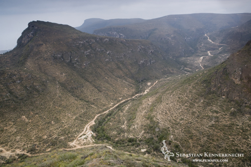 Road and livestock paths on mountain side, Hawf Protected Area, Yemen