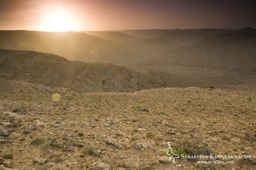 Desert wadi (valley) system at sunset, Hawf Protected Area, Yemen