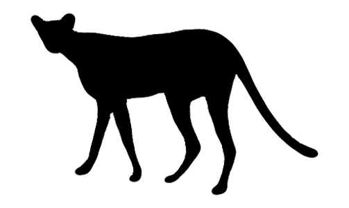Northwest African Cheetah Archives - Sebastian Kennerknecht