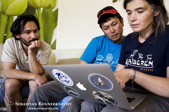 Snow Leopard (Panthera uncia) conservationists, Tanya Rosen and Zair Kubanychbekov, and biologist, Khalil Karimov, making final project arrangments, Bishkek, Kyrgyzstan