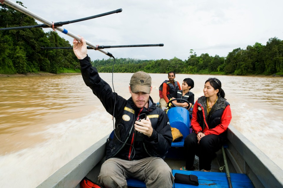 Bornean Clouded Leopard (Neofelis diardi borneensis) researcher Andrew Hearn radio tracking from boat, Kinabatangan River, Sabah, Borneo, Malaysia