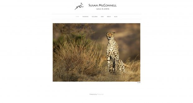 Susan McConnell - Incredible Women Wildlife Photographers