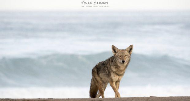 Trish Carney