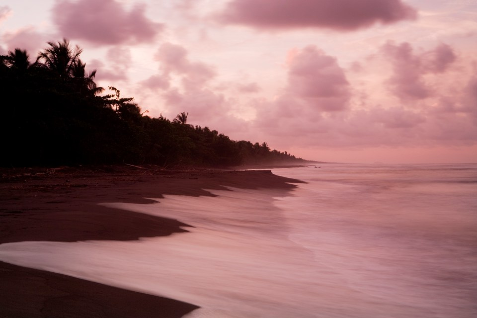 Palms along coastline at sunset, Tortuguero National Park, Costa Rica