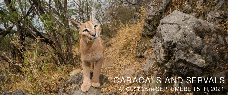 Serval and Caracal Photo Tour 2021