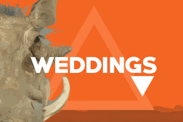 Pumba featured images weddings