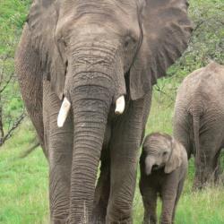 Elephants at Pumba