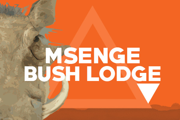Pumba featured images msenge bush lodge