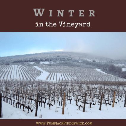 Winter in the Vineyard with Pumpjack Piddlewick