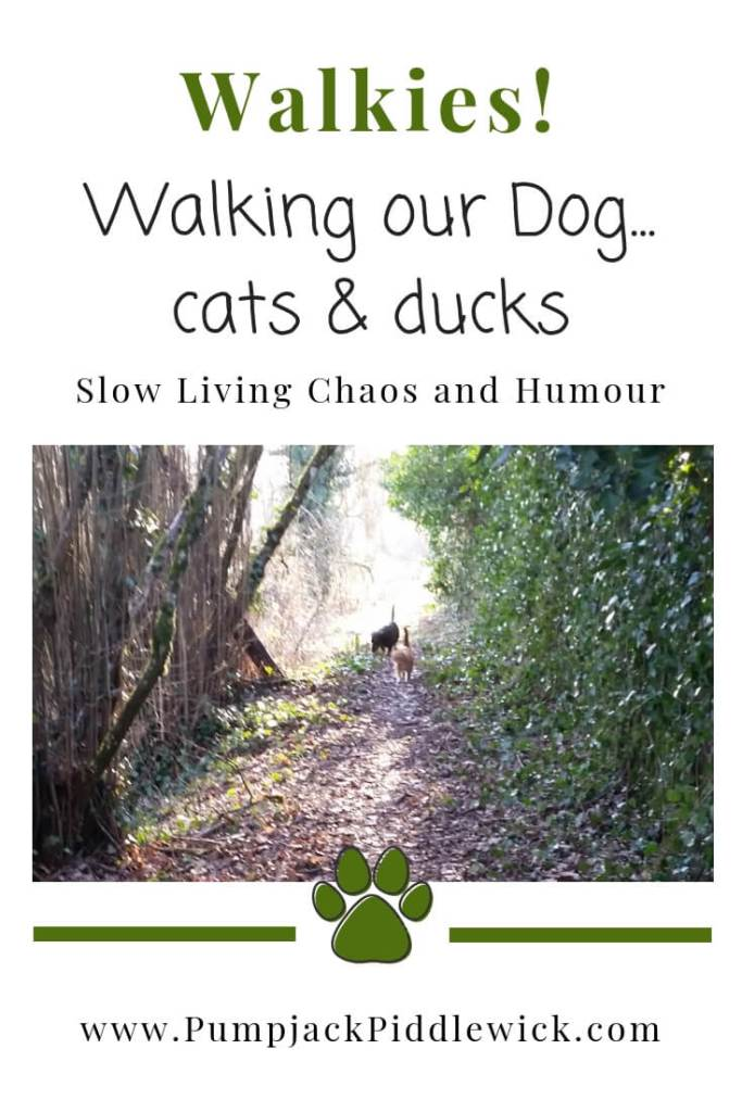 Walkies with our dog, cats and ducks too at PumpjackPiddlewick