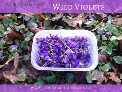 WIld Violets foraged for tea and syrup at PumpjackPiddlewick