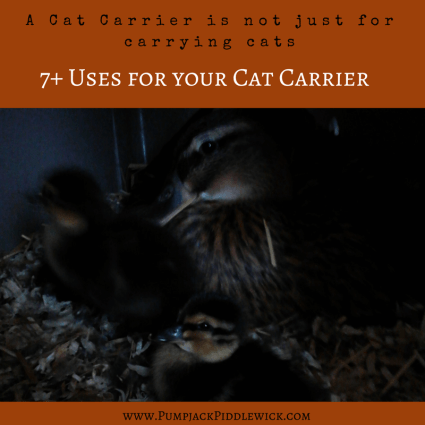 A Cat Carrier is not just for carrying cats