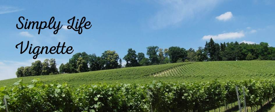 summer in the vineyard at Pumpjack Piddlewick