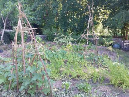 making a climbing bean tipi basket at PumpjackPiddlewick