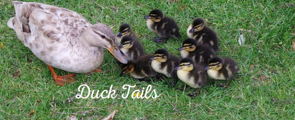 Duck flock inbreeding discussion, issues and truths at PumpjackPiddlewick