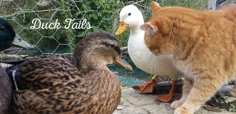 looking at interspecies living at PumpjackPiddlewick