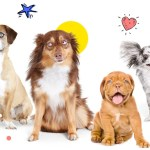 120 Pawesome Dog Names That Stand Out From The Pack Pumpkin Pet Care