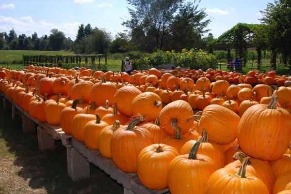 Diana Davis pumpkin pic