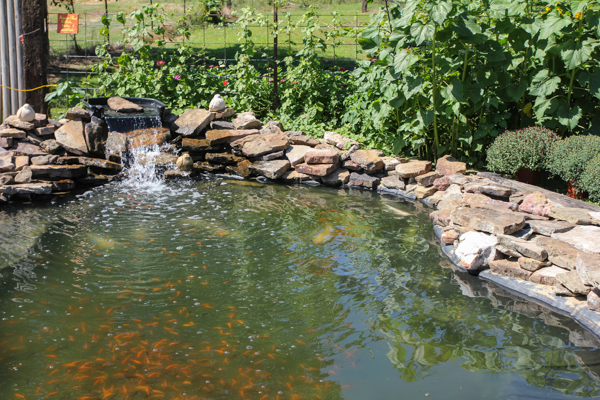 waterpond2 (1 of 1)