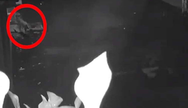 pune-news-leopard-sighting-in-punes-mohammadwadi-citizens-panic-forest-officials-visit-the-spot-cctv-video News in hindi