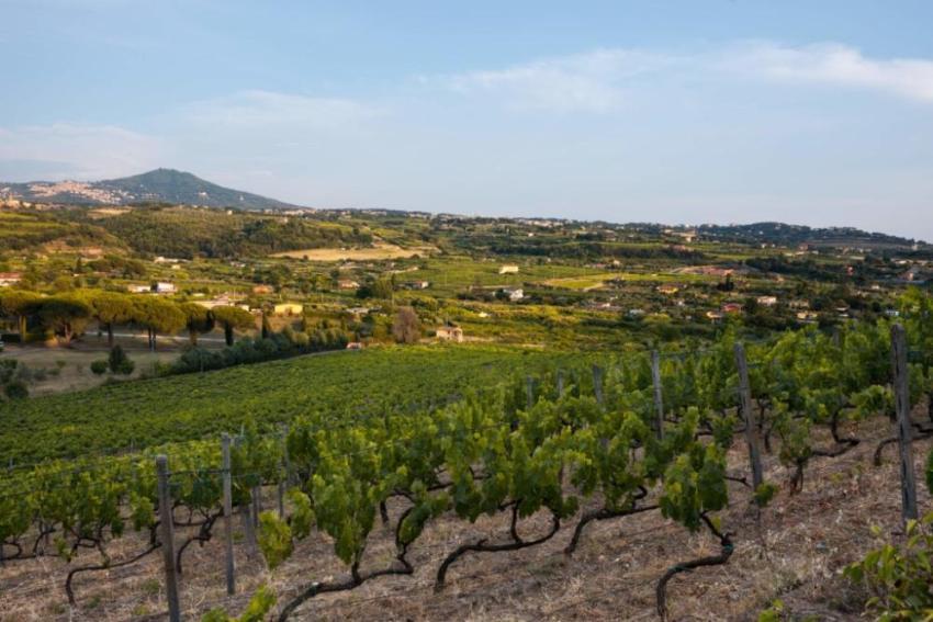 gabriele magno, castelli romani, valle marciana, grottaferrata, roma, vino dei castelli, biologico, vino biologico