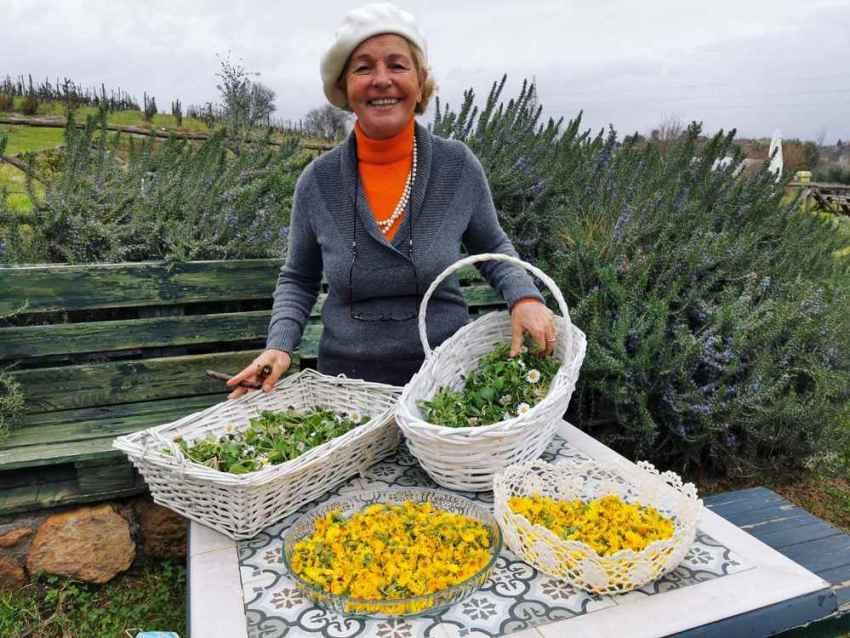 erba regina, frascati, castelli romani, erbe spontanee, erbe coltivate, tuscolo