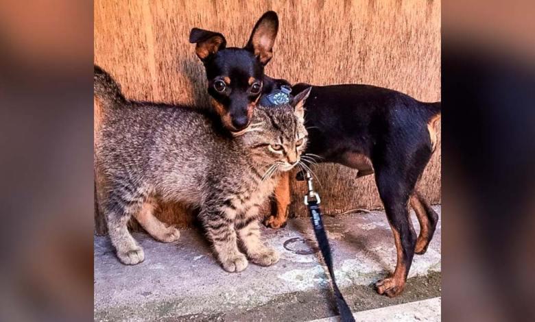 Photo of Perrito convence a sus dueños para que adopten un gatito callejero