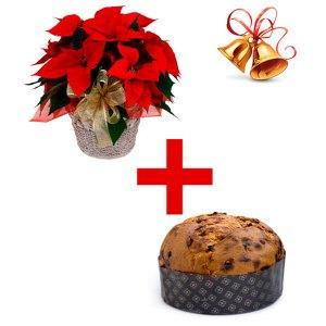 Consegna a domicilio di Stella di Natale e panettone Natalizio online