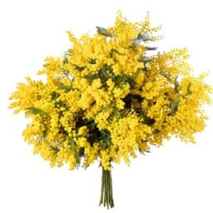 per la Festa della Donna consegna un mazzo con mimosa online